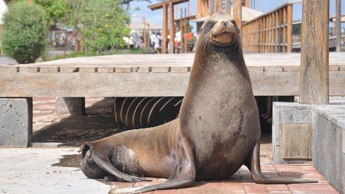 Galápagos, archipel inattendu