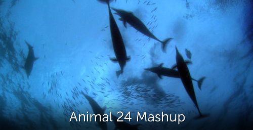 Animal 24 Mashup