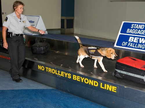 Hondenpatrouille