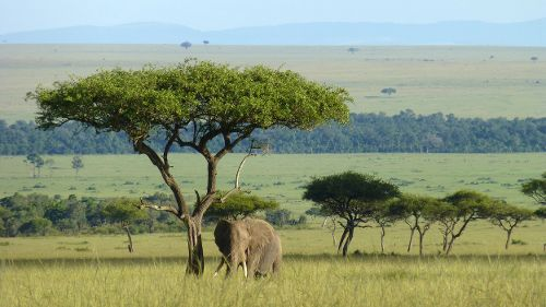 L' éléphant qui donna sa vie