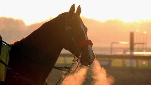 Paardensport: Rolex Grand Slam in Genève