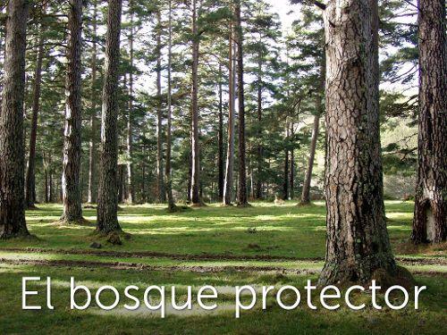 El bosque protector