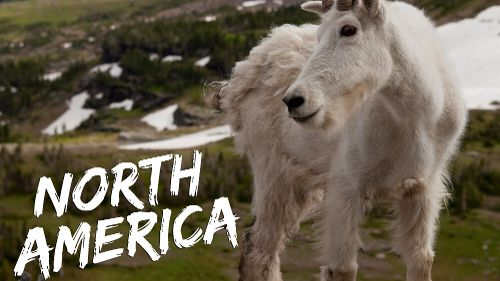 Discovery Channel's North America
