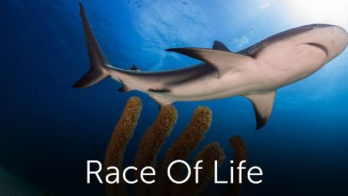 Race Of Life