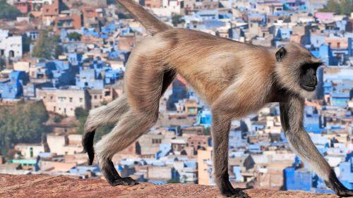 India's Wild Edens