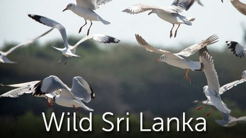 Merveilleux Sri Lanka