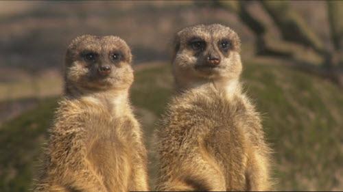 Burgers' Zoo: Drukte in de dierentuin