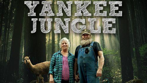 Yankee Jungle