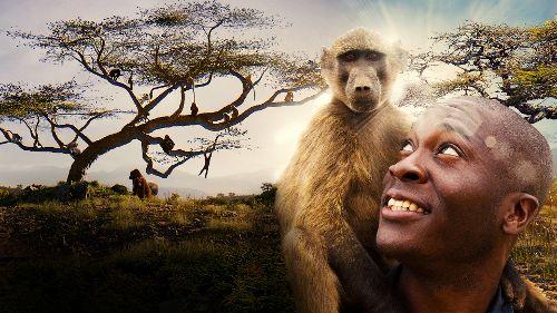 L'odyssée des primates