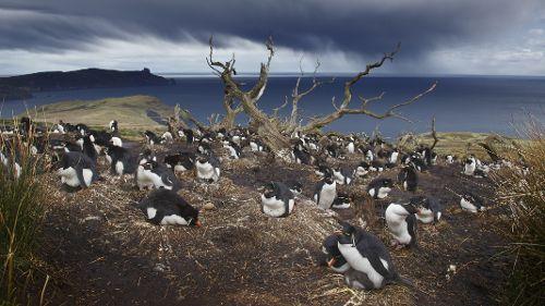Patagonie, dernier paradis sauvage