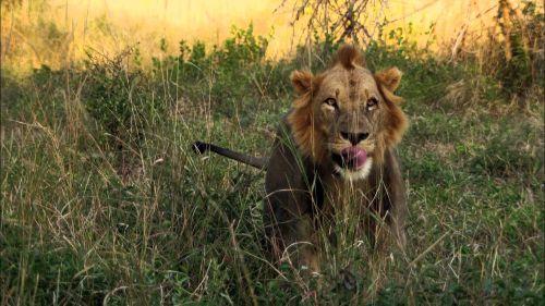 Gorongosa: Le royaume oublié
