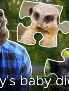Andy's Baby Animals