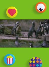 De pinguïnjas